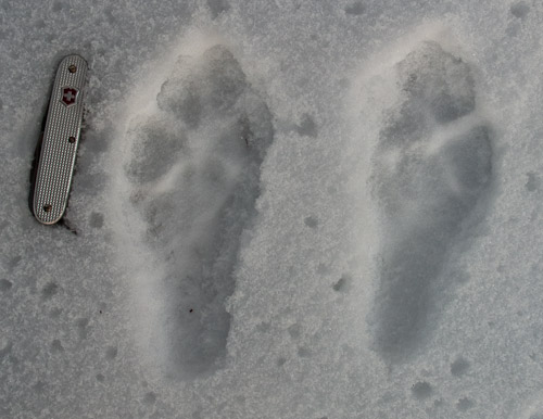 Mountain Hare Prints - Ice Raven - Sub Zero Adventure - Copyright Gary Waidson, All rights reserved.
